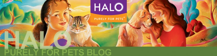 The Halo Pet Foundation